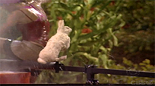 Big Brother 8 - Bunny Hop endurance competition - Zach wins